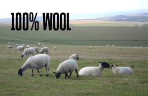 sussex-sheep