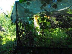 JUNGLE ..RAIN FOREST GARDEN B4 015