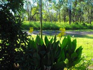 JUNGLE ..RAIN FOREST GARDEN B4 022